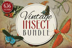 Insect Vector Graphics Bundle