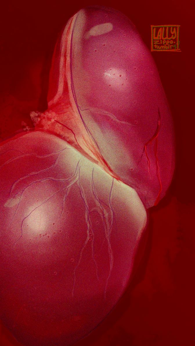 Liver by lallyzippo