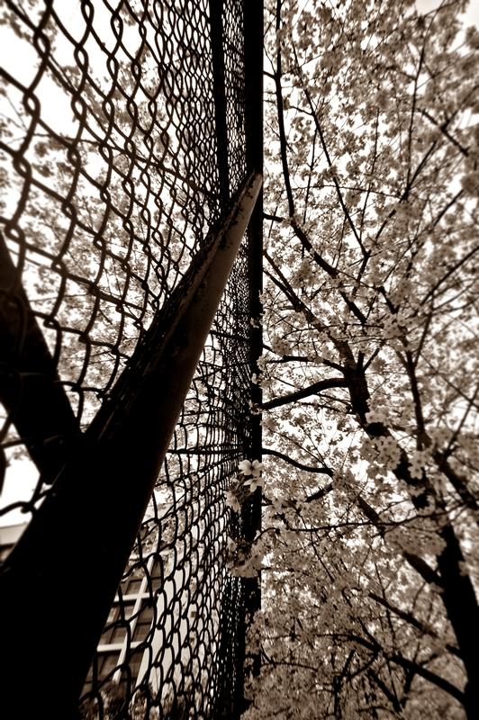 Jangan terpenjara dengan masalah. Sumber penyelesaian ada pada Allah ~ picture by rokjitjung