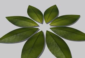 Leaftest by softdrink