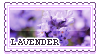 Lavender by OculusOsou