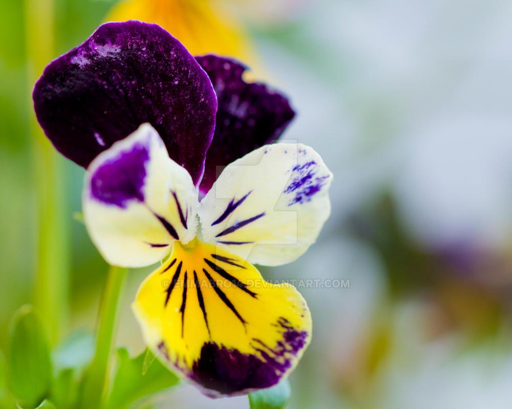 Macro Flower by Emmabro14