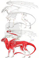 European Dragon Anatomy by Pythosart