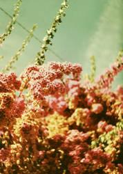 fiori by MINA-Production