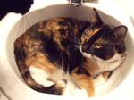 Suna in the Sink
