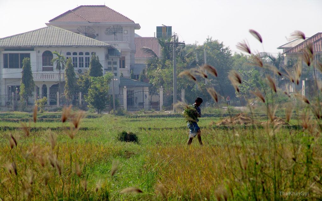 grass hopper by ThaKhinGyi