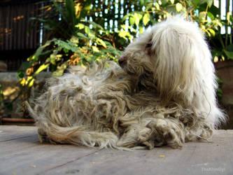 dirty dog by ThaKhinGyi
