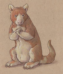 Clinton's Kangaroo