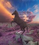 Black Horse Sunset