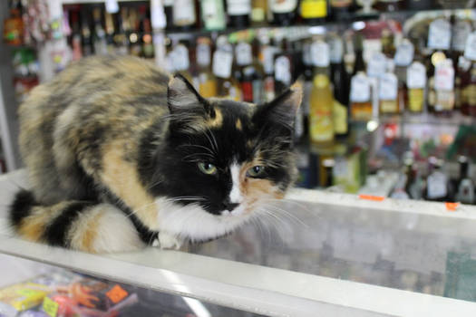 cat guarding the department with an alcohol