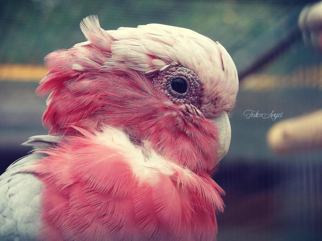 Parrot in Pink by oOFallenAngellOo