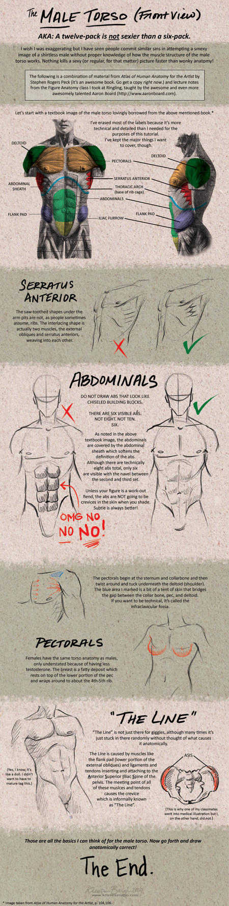Tutorial: Male Torso - Front by KrisCynical