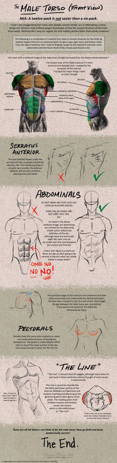 Tutorial: Male Torso - Front
