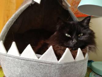 Shark bed cat by Ollumii