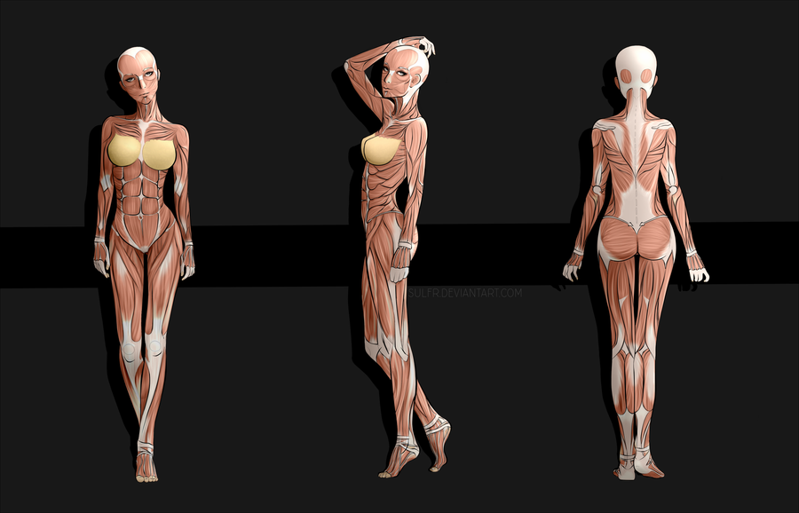 Female Anime Anatomy by sulfr on DeviantArt