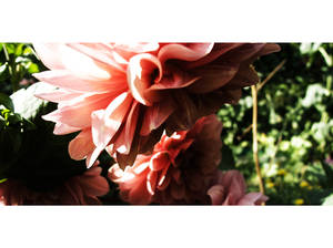 . garden neutral .