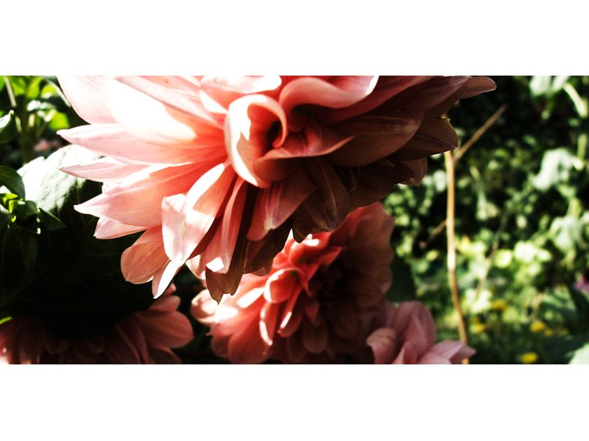 . garden neutral . by trocker