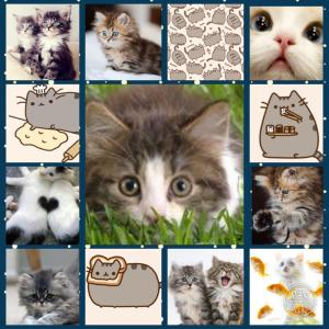 Foxycat44's Profile Picture