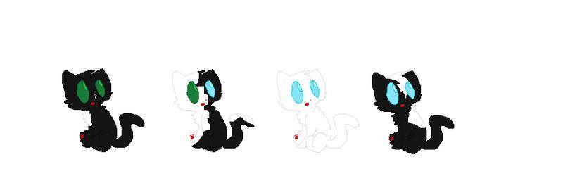 Black and white cat adopts, Cheap, TSC