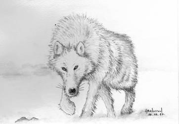 WOLF 2017-11-17