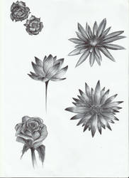 Flower sketch by LilithHatchersoon