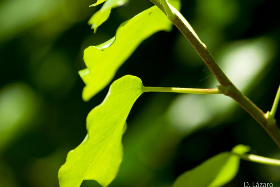 Multiple green by du-la