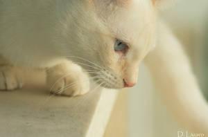 Curiosity killed the cat by du-la