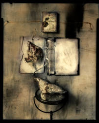 Evidence-book, bones + bird by lauren-rabbit