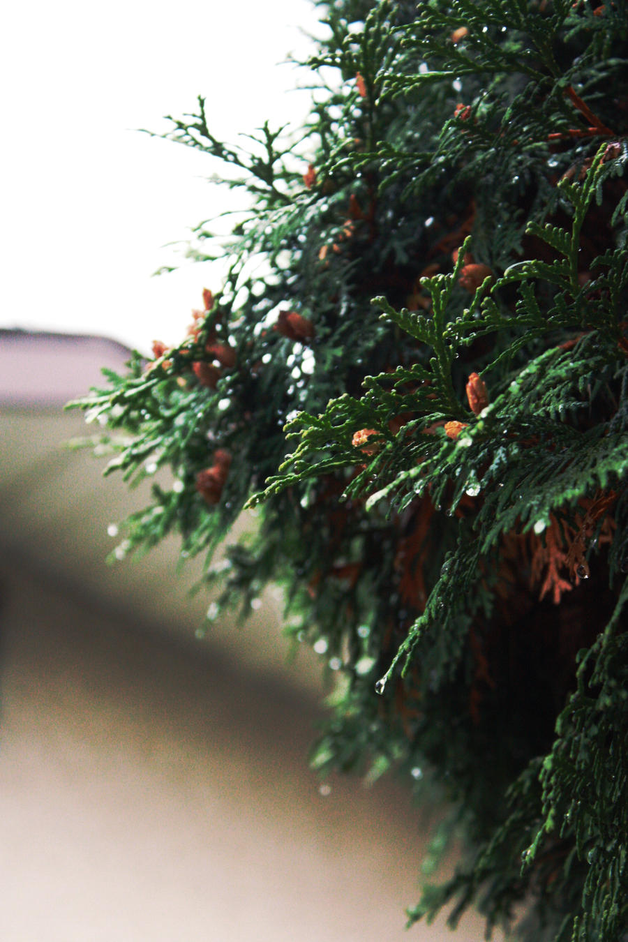 evergreen2 by fermented-elegance