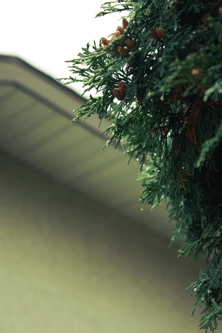 evergreen3 by fermented-elegance