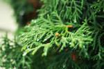 evergreen4 by fermented-elegance