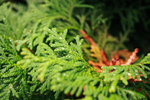 evergreen5 by fermented-elegance