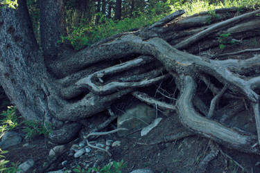 roots by fermented-elegance