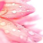 lagrimas de chuva by silviaisa