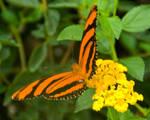 Butterfly 2 by PlumCrazee