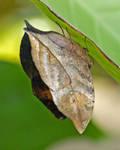 Leaf With Legs by PlumCrazee