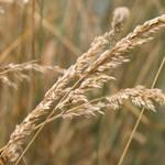 Gone to Seed by PlumCrazee