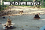 box cats funny