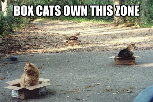 box cats funny by oObloodydayOo