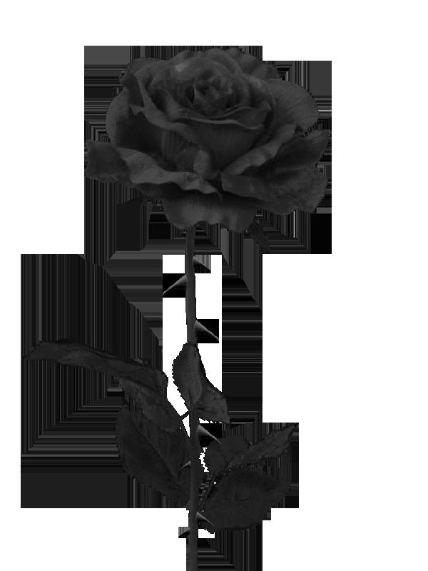 Single Rose On Bed Tumblr