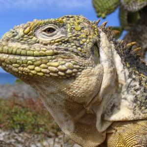 Dudereaper40's Profile Picture