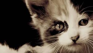 gato by ralau