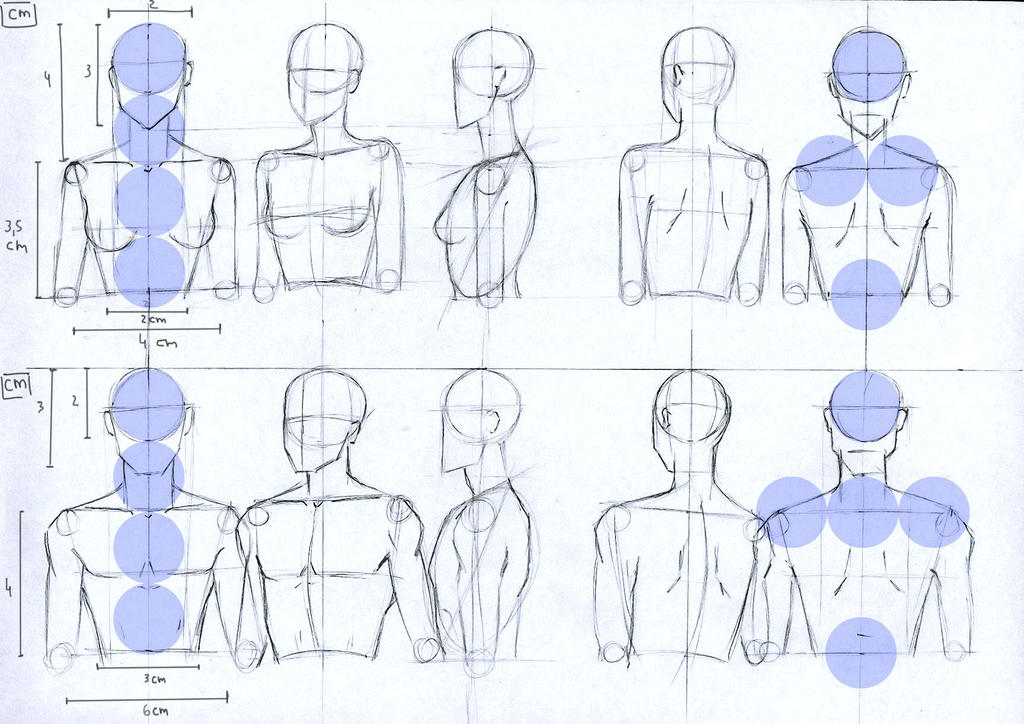 Female and Male anatomy proportions head and torso by Lucis7 on ...
