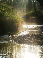River's Dawn