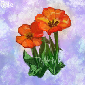 Orange Tulips by Nrath