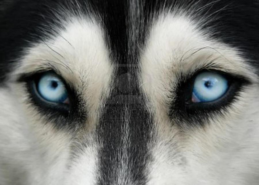 Husky Eyes by I-Run-WithWolves on DeviantArt