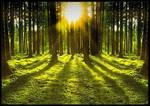 Sun Through Forrest on Grass copy