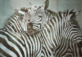 Zebra (watercolor)