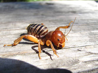 Potato Bug 1 by Zepher-Stock