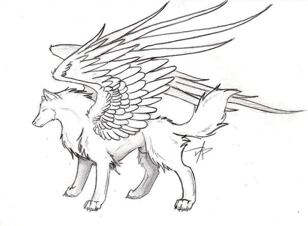 Wolf Image Drawing Wolf Drawings Winged Wolf